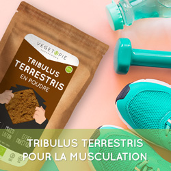 tribulus-terrestris-musculation