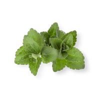 feuille-stevia-perform-acai