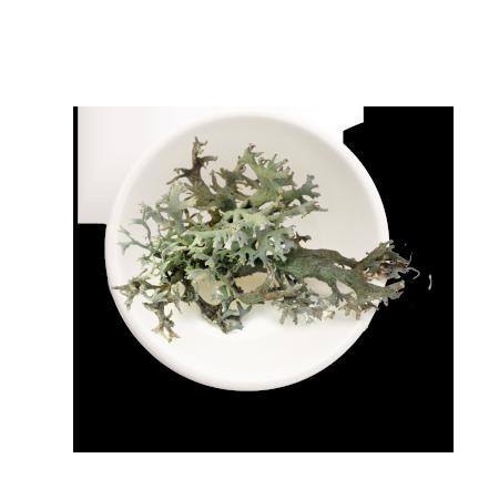 vitamine-D3-lichen-thrive